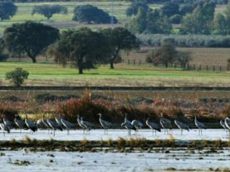 Adenex pone en valor este domingo la importancia del recurso de las grullas a su llegada a Extremadura
