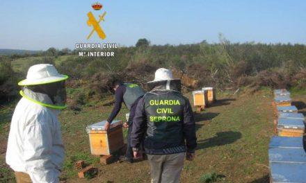 El Seprona de Salamanca detiene a un hombre como presunto autor del robo de colmenas en Caminomorisco