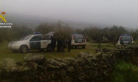 La Guardia Civil sorprende en tres explotaciones agrícolas a once personas sustrayendo aceitunas