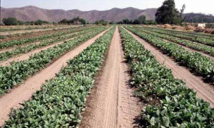 La Junta abona cuatro millones de euros en ayudas a la contratación de seguros agrarios