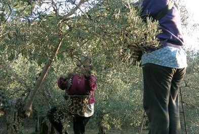 El Ejecutivo regional asegura que destinará cerca de mil millones de euros al Plan de Desarrollo Rural 2014-2020