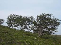 El norte y sur de Extremadura permanece este domingo en alerta naranja por fuerte viento