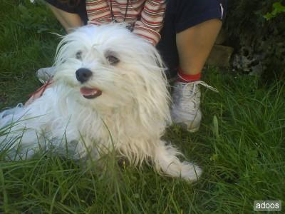 Un perro maltés gana el concurso canino de la XXVII Exposición Internacional Canina de Badajoz