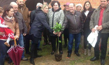 Villanueva de la Sierra celebra la 212 edición de la Fiesta del Árbol con una jornada institucional