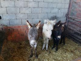 """""""El Refugio del Burrito"""" recibe más de 500 solicitudes para adoptar los burros rescatados en Cáceres"""