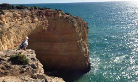 La región lusa del Algarve presentará por primera vez sus recursos ornitológicos en la nueva edición de FIO