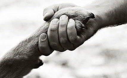 El Ayuntamiento de Coria lanza una campaña para fomentar el civismo entre los dueños de mascotas