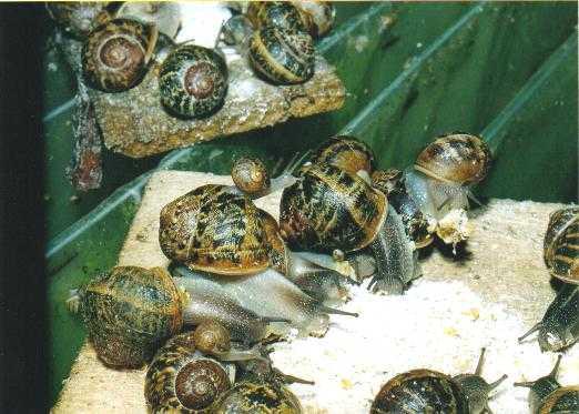 Adesval organiza en Coria un curso de 100 horas de helicicultura para gestionar una granja de caracoles