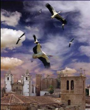 Cáceres presenta en FIO una guía con rutas urbanas y con los puntos idóneos para el avistamiento de aves