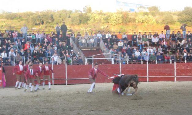 El diestro João Maura  triunfa en la corrida de rejones de la Feria del Toro de Coria con cuatro orejas