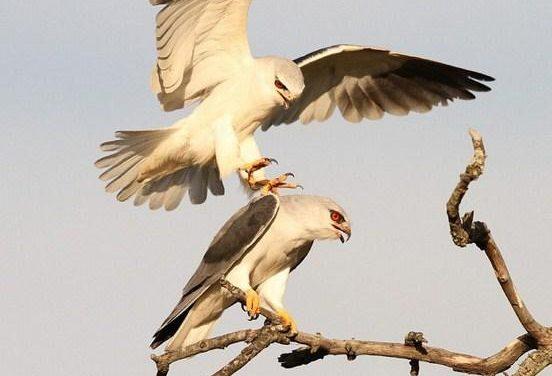 Extremadura viaja a Israel para promocionar el turismo ornitológico en una competición mundial