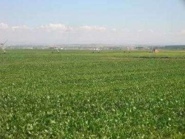 El Ayuntamiento de Moraleja publica las condiciones para arrendar una parcela en la Dehesa Boyal