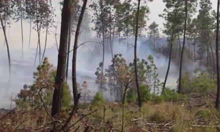 La Asamblea de Extremadura acoge este lunes nuevas comparecencias sobre el incendio de Sierra de Gata