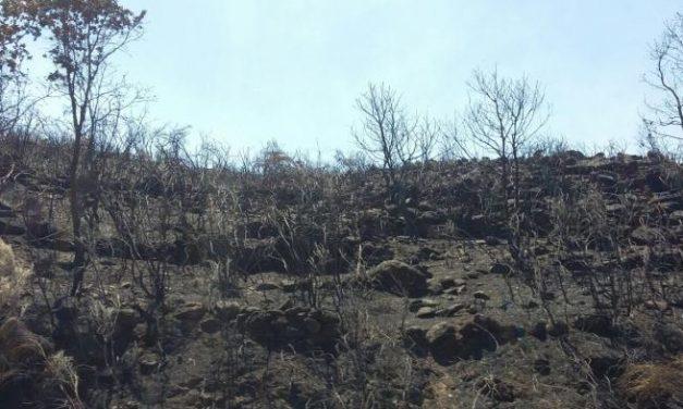 El PSOE insta al Gobierno a aprobar ayudas para paliar los daños del incendio de Sierra Gata