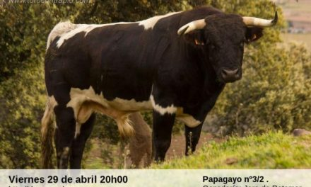 Rincón del Obispo dará comienzo a las fiestas de San José Obrero con la lidia de un toro y una vaca este viernes