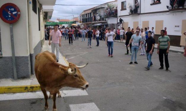 El barrio de las Eras de Moraleja celebrará este sábado el Primero de Mayo con eventos taurinos