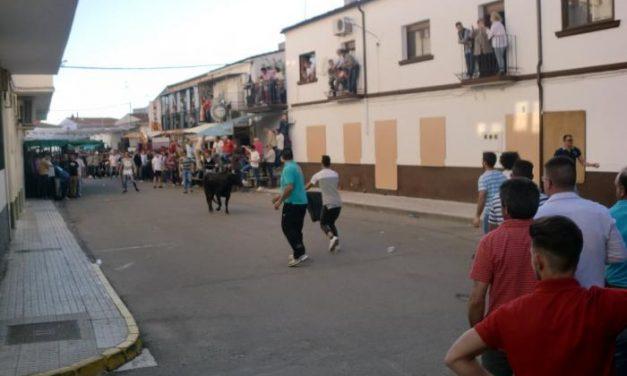 Los festejos taurinos del Primero de Mayo concluyen con un herido en la localidad Moraleja