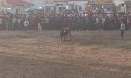 Rincón del Obispo pone fin a los festejos taurinos en honor a San José Obreo con un herido por asta de toro