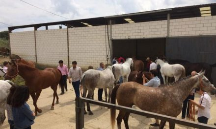 El jinete gaditano Diego Peña consigue el primer puesto en el V Concurso de Doma Vaquera de Portaje