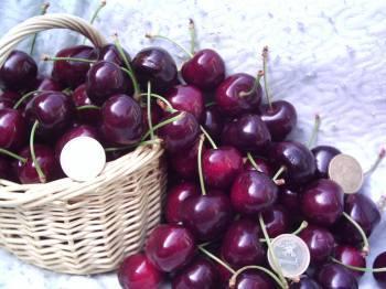 Los nutricionistas aseguran que las propiedades de la cereza del Jerte previenen el envejecimiento celular