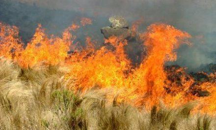 El fuego arrasó cerca de 12.000 hectáreas en Extremadura el pasado año 2015