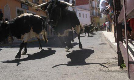 Los astados de Guadajira protagonizan una carrera rápida y limpia en el primer encierro de Moraleja