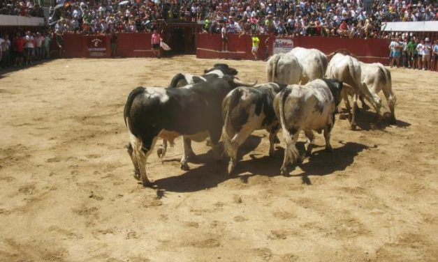 Los Patas Blancas protagonizan el encierro más largo de los celebrados en San Buenaventura