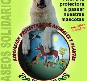 La Protectora de Animales de Plasencia denuncia los últimos abandonos de animales y la falta de fondos