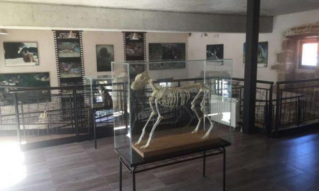 """El Centro de Visitantes """"El Lobo"""" será el primer espacio cultural dedicado a este animal en Extremadura"""
