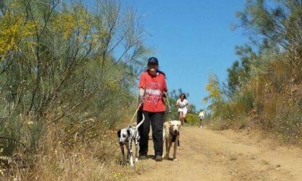 """La Protectora de Animales """"El Refugio"""" de Plasencia organiza una ruta canina para recaudar fondos"""