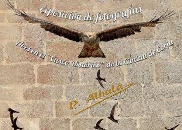 Coria acogerá hasta el 5 de septiembre la exposición 'Aves en el Casco Histórico de la Ciudad de Coria'