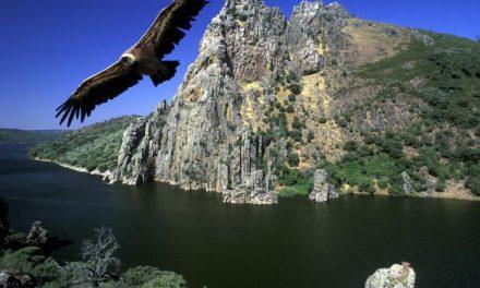 SEO asegura que Monfragüe está entre las Áreas de Conservación de Aves más amenazadas del mundo