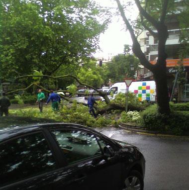 El fuerte viento provoca la caída de un árbol en el paseo de Cánovas de Cáceres y obliga a cortar el tráfico