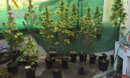 La Guardia Civil interviene 102 plantas de marihuana entre Valencia de Alcántara y Jerte