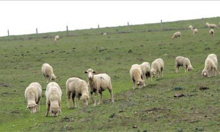 Asaja Extremadura iniciará acciones judiciales contra la Junta por la tuberculosis bovina