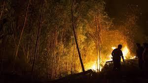 La cifra de los incendios y las áreas afectadas en 2015 es inferior a la media de la última década