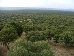 """Plasencia recibirá a un millar de expertos forestales en el congreso """"bioeconomía y servicios ambientales"""""""