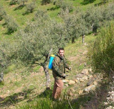 Los olivareros extremeños pueden consultar en internet las ayudas que han recibido desde 2002 a 2004