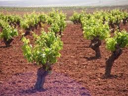 La Junta convoca ayudas para la creación de grupos de innovación en materia de sostenibilidad agrícola