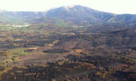 Comienza una recogida masiva de semillas para reforestar la comarca de Sierra de Gata