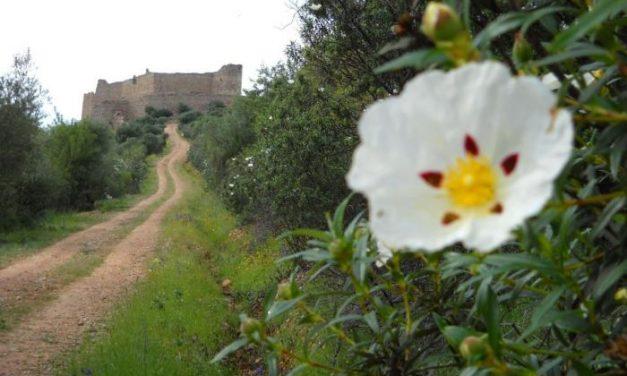 Portezuelo espera recibir a unos 250 corredores con motivo de la X Subida al Castillo