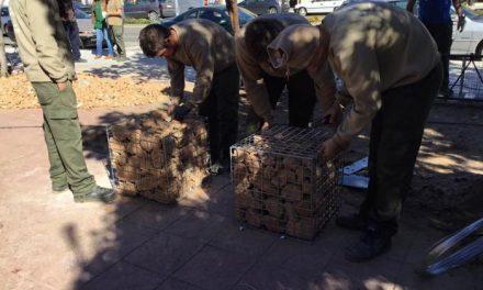 Los alumnos de Aprendizext trabajan en la mejora de la plaza de la Fuente del Avispero de Moraleja