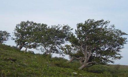 El 112 activa la alerta amarilla por lluvias y vientos en el norte de Cáceres y las zonas del Tajo y el Alagón