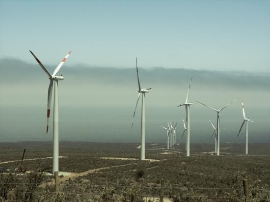 Vettonia critica la posible instalación de parques eólicos en zonas protegidas para el lince ibérico