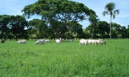 La Junta abona 4 millones de euros en concepto de ayudas a la contratación de seguros agrarios
