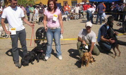 La Feria Nacional del Perro de Ahigal espera reunir 1.500 participantes este domingo en el mercado ganadero