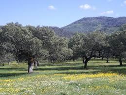Medio Ambiente aboga por proteger la dehesa al objeto de preservar sus características medioambientales