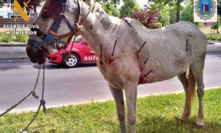 Investigan a un ciudadano portugués por un presunto delito de maltrato animal sobre un caballo