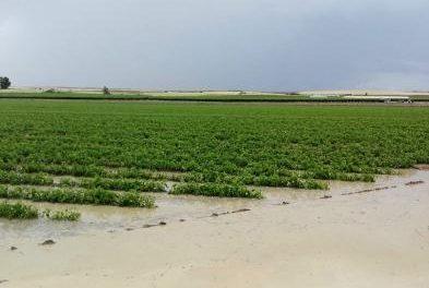 UPA alerta a los agricultores de que la situación puede empeorar por la previsión de tormentas en la región