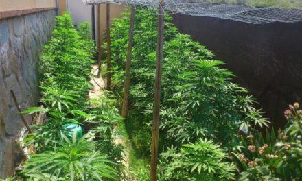 Apoyo unánime de los grupos políticos de la Asamblea de Extremadura al uso terapéutico del cannabis